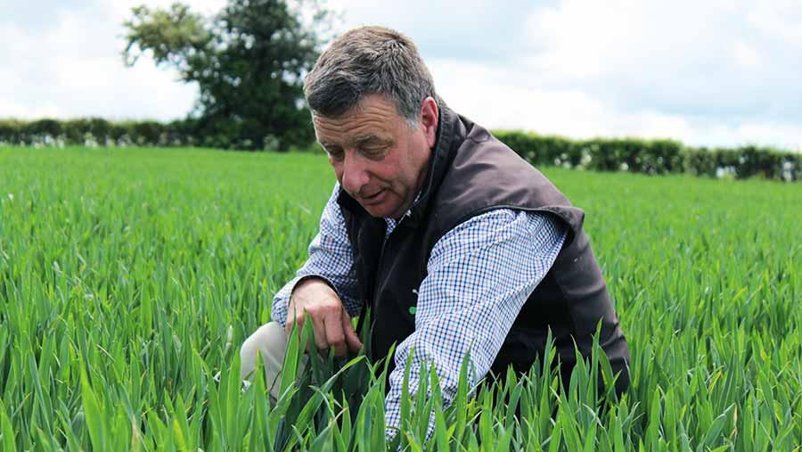 Hutchinsons agronomist Andrew Goodinson © Oli Hill/RBI