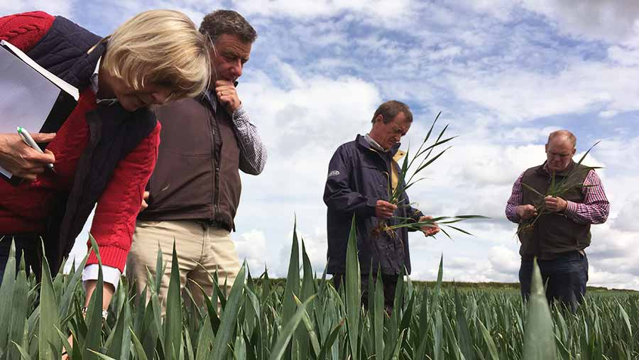 The Disease Force team inspect winter wheat in Herefordshire © Oli Hill/RBI