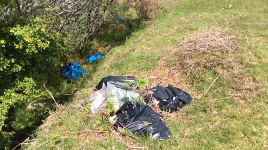Fly-tipped waste containing sheep carcasses lies in a field