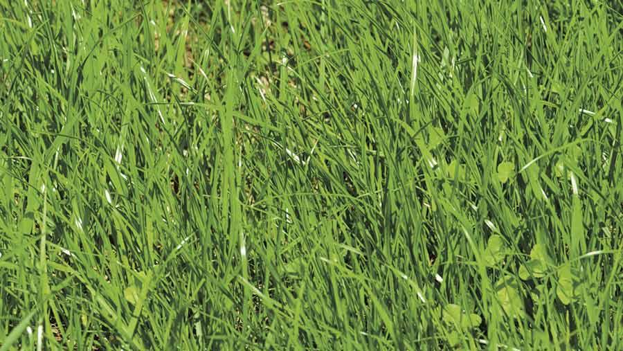 A reseeded grass field