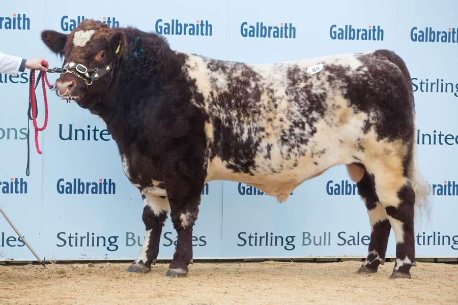 Glenisla Kelpie from Major Gibb at Stirling Bull sales