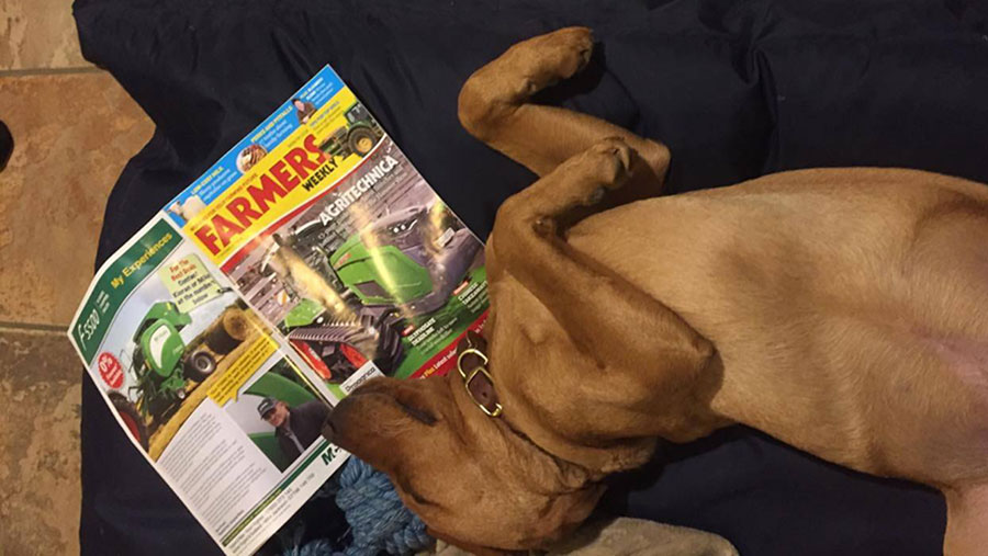 Moose the labrador puppy sleeping with Farmers Weekly