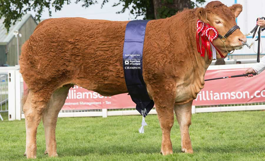 Limousin at the Royal Highland Show 2017