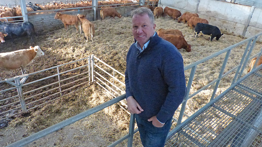 Stuart Baldwin stands in a shed with cattle