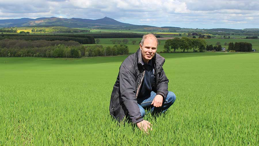 Farm manager Robert Drysdale in a crop of Golden Promise spring malting barley © Oli Hill
