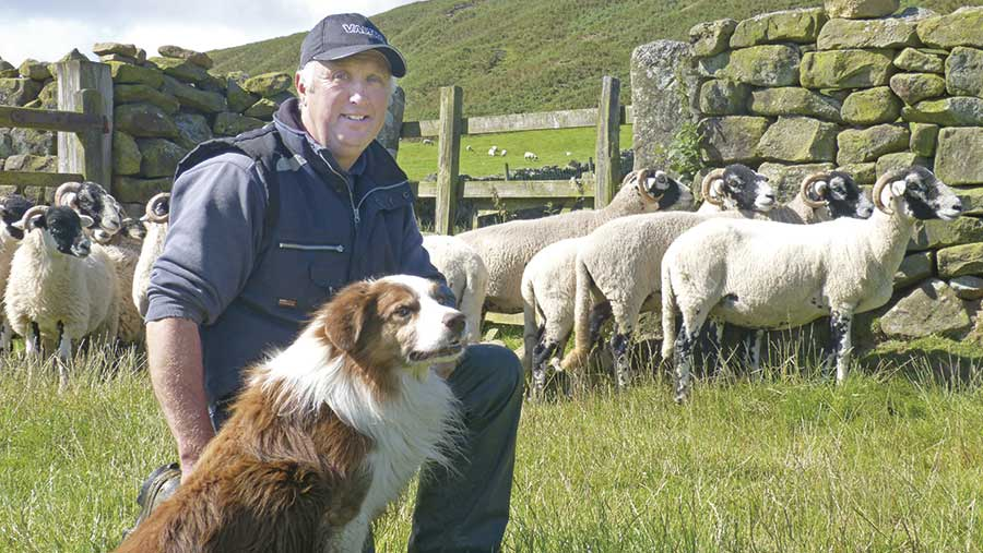 Tim Dunn kneels in a field with sheep and a dog