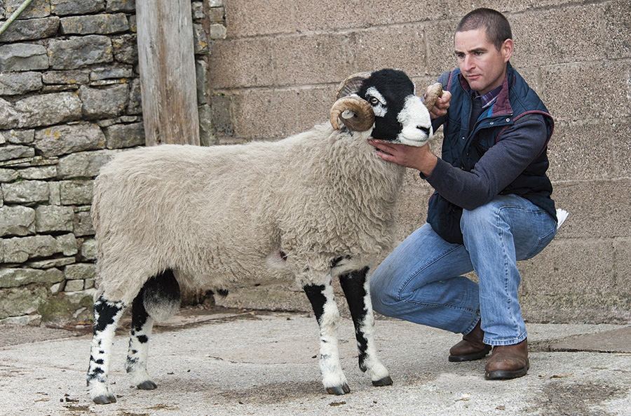 Sale leader at £40,000 was an entry from Messrs Cockbain, Rakefoot Farm