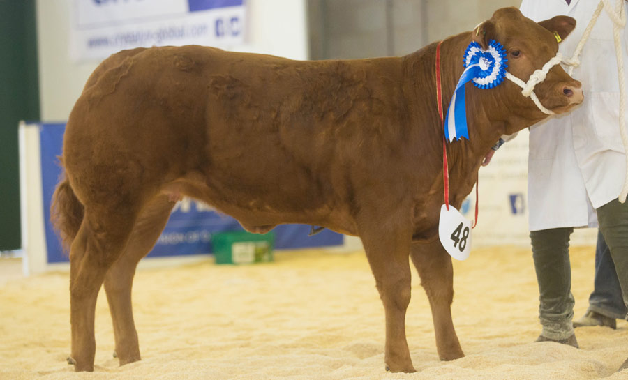 Reserve Baby Beef Champion
