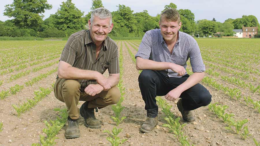 David and George Halsall squat in a field of sugar beet