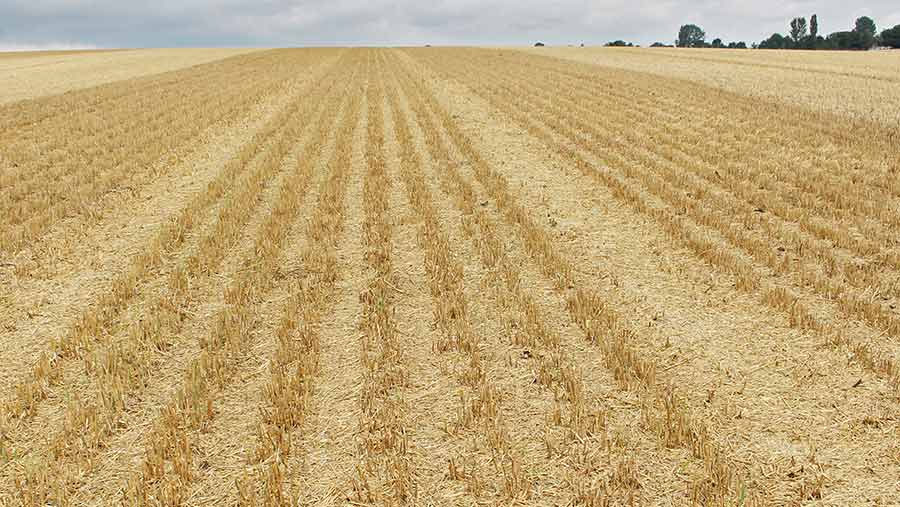 Chaff lines