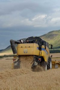 A combine harvester combines crops in a field
