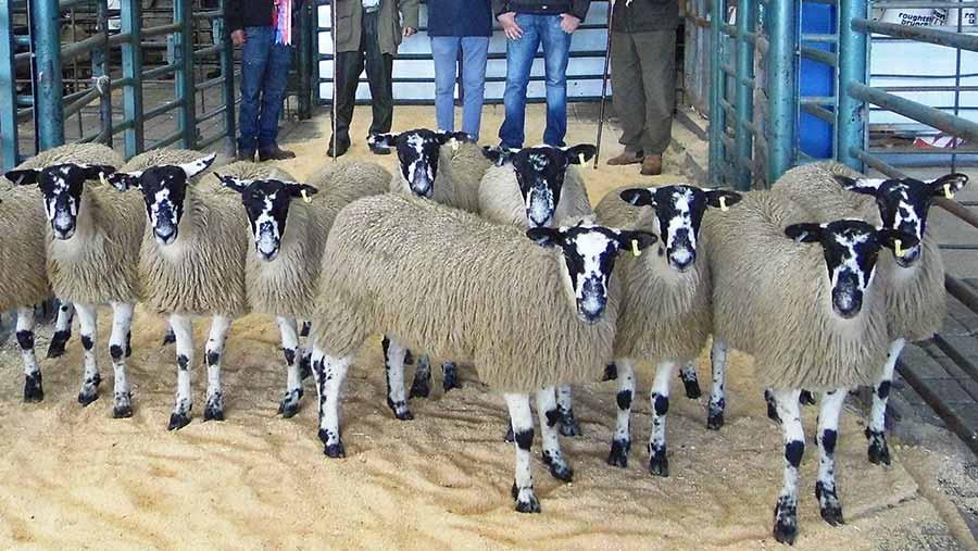 Champion pen of lambs