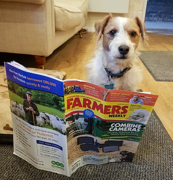 Dog reading farmers weekly