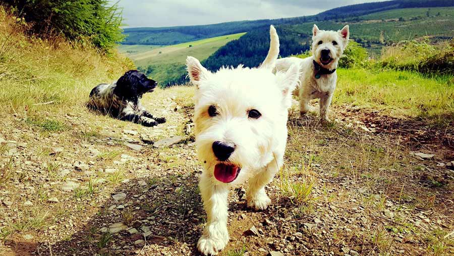 Dogs on the farm c Amy Watkins