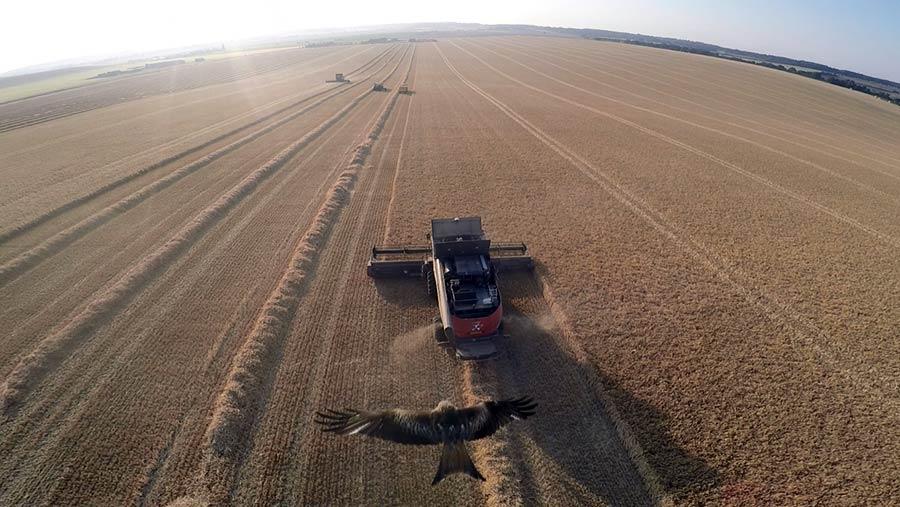 harvest-red-kite-c-Olly-Pemberton