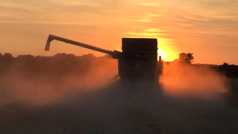 harvest-sunset-c-Josie-Edwards