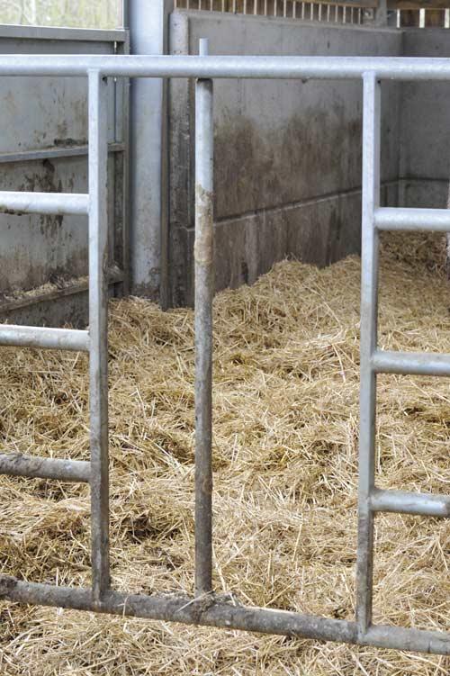 Calf creep gate