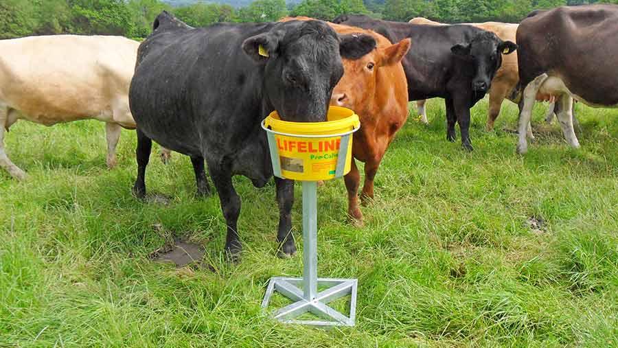 Alan Hughes's cow feeding stand