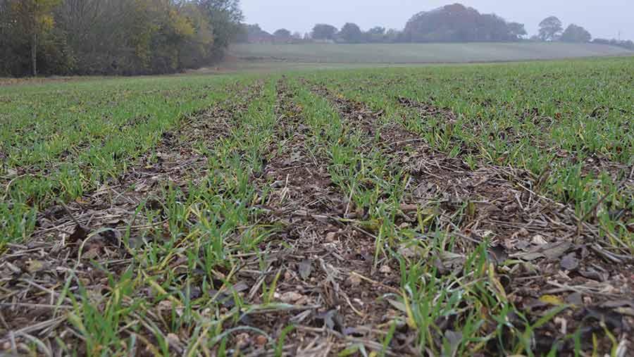 barley crop no-till