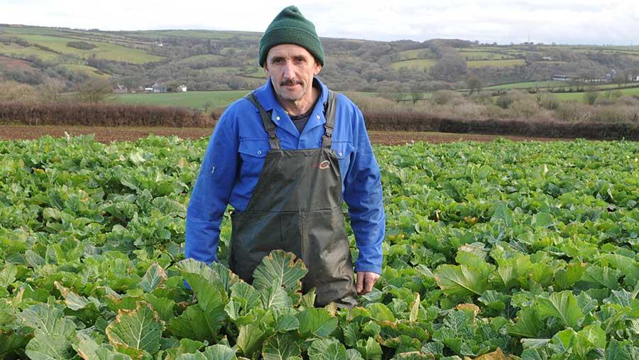 Beef producer Berwyn Lloyd