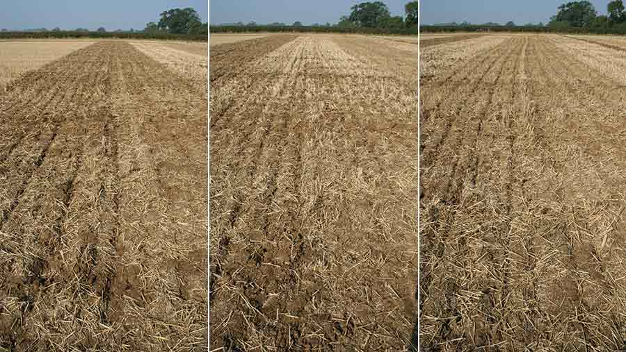 Three different cultivations side by side