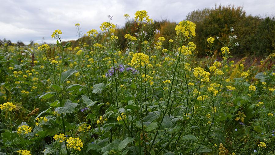 Flowering strips