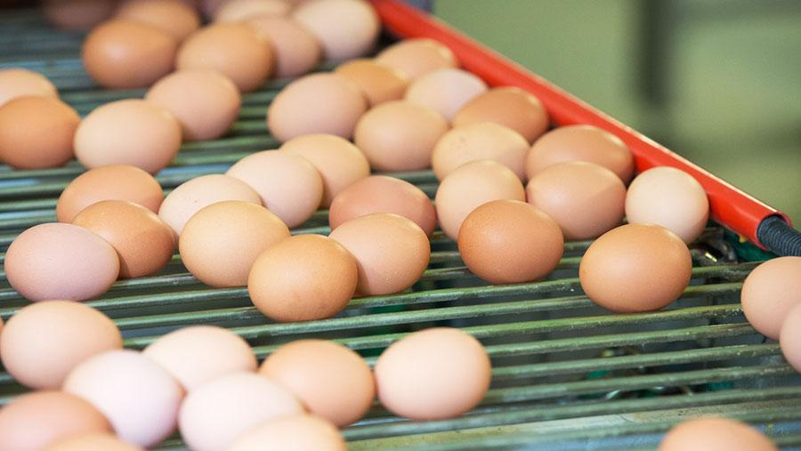 Eggs on a conveyor belt © Tim Scrivener