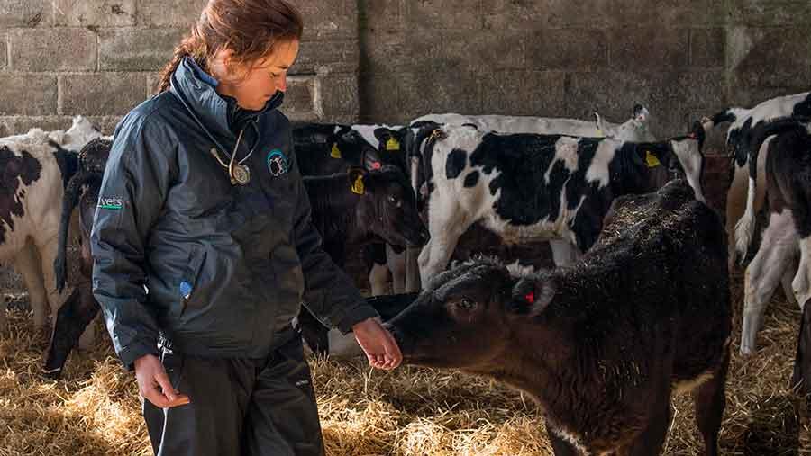 Esme Moffat with calves