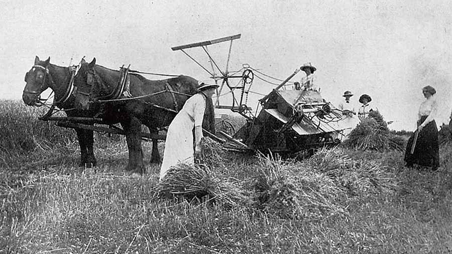 A black-and-white image of Women sheaving corn at Missenden in Buckinghamshire