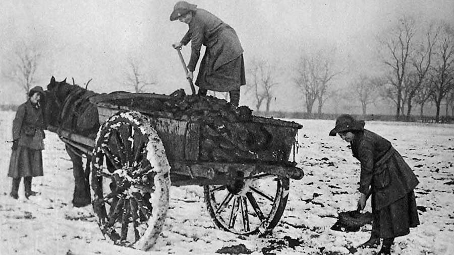 A black-and-white photograph showing a girl standing on a cart. She is shovelling manure on to a field while other girls work next to her