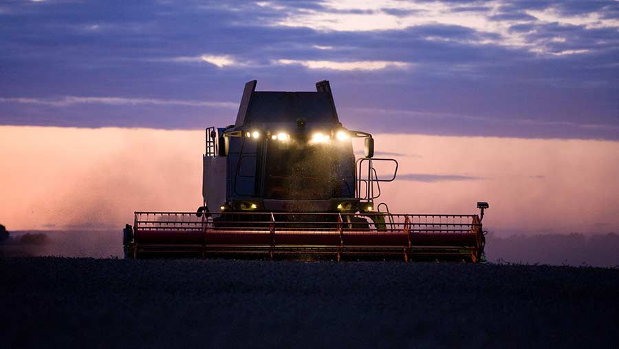 Wheat being harvested at dusk