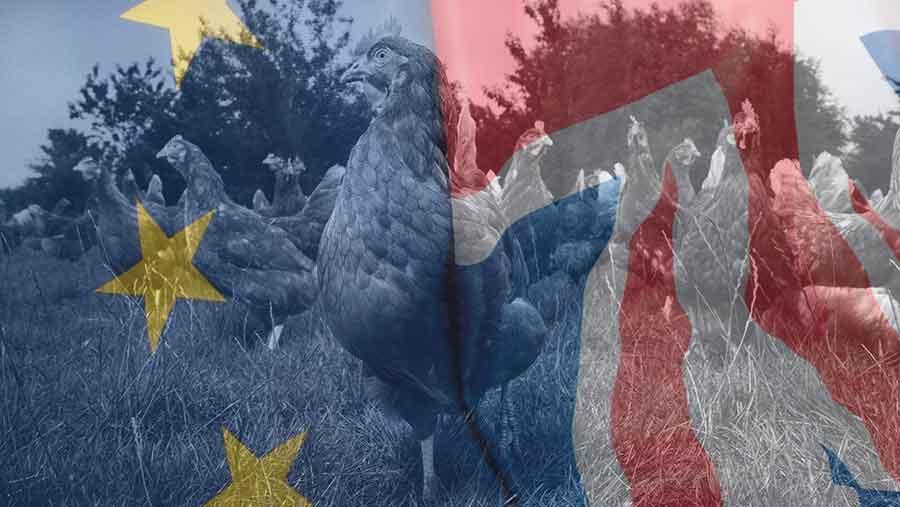 hens and EU flag composite image