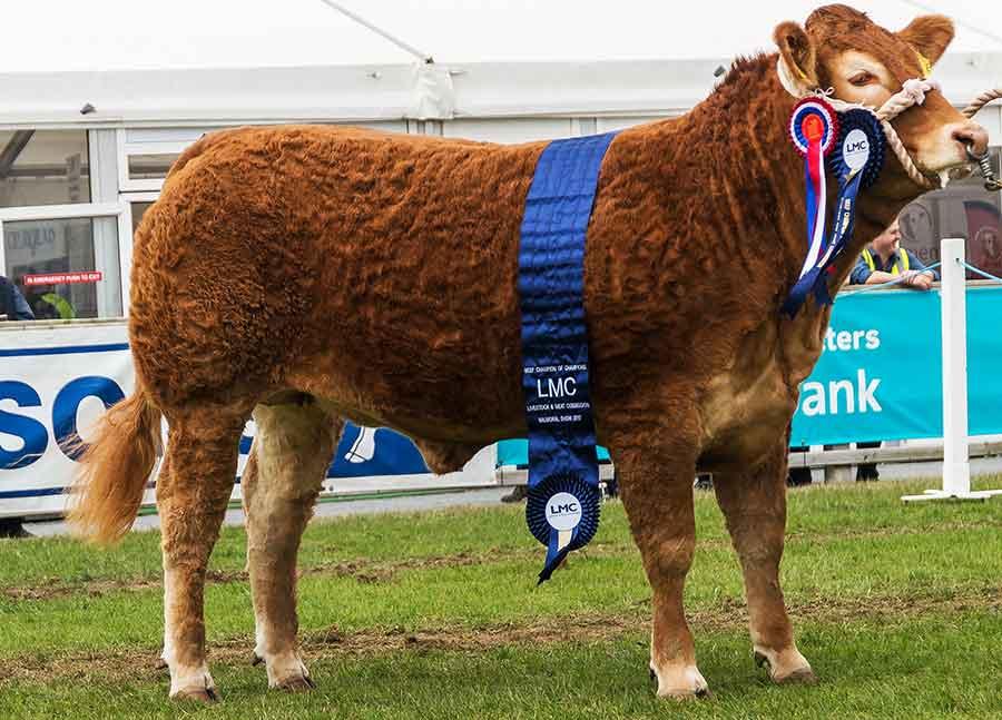 Interbreed-Beef-Champion