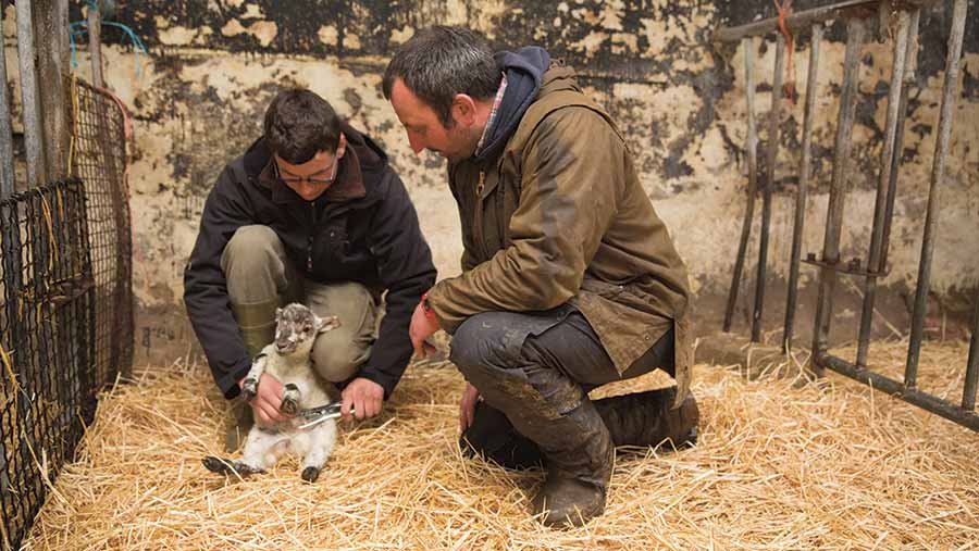 Farmer James Read helping a young farmer with a lamb