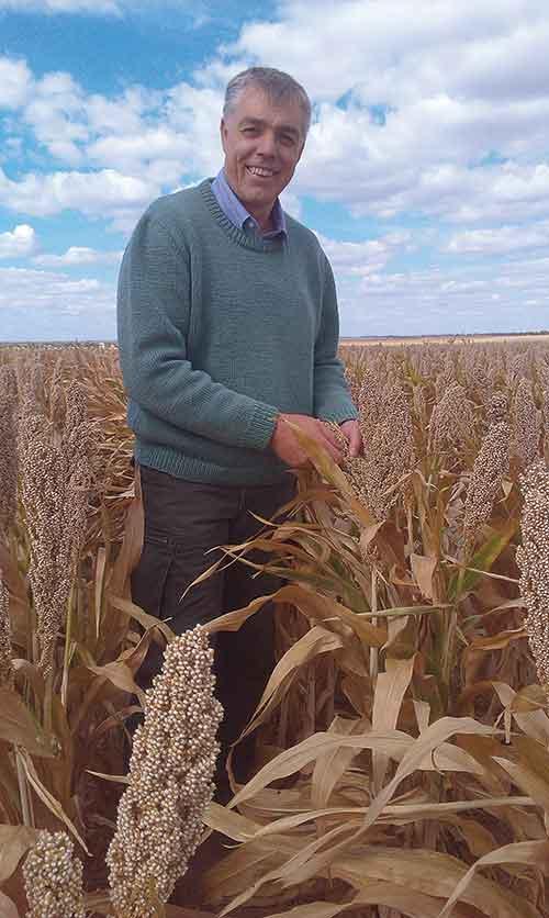 Lawrence-Richmond in wheat field