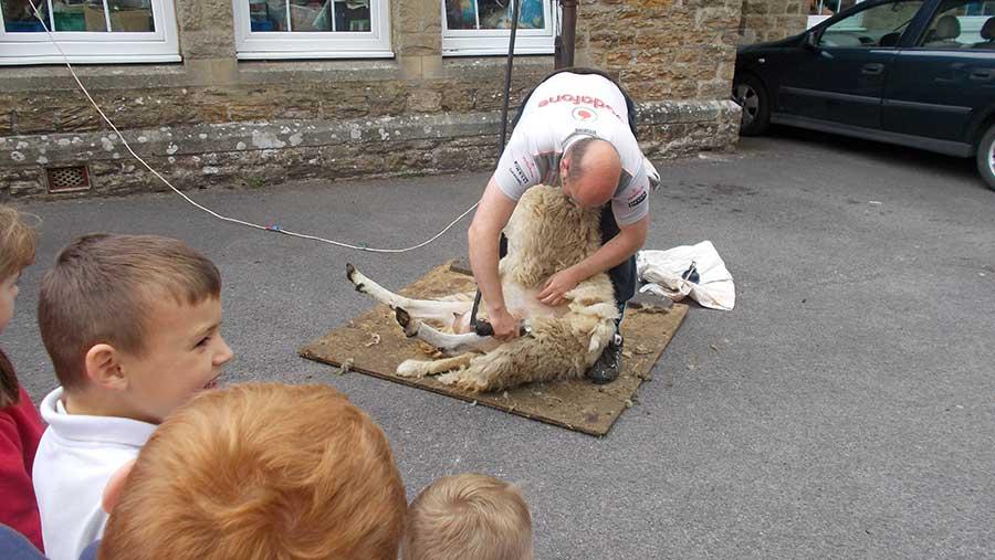 Greg Dalton demostrates clipping sheep