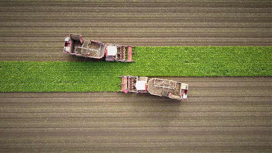 Aerial view of sugar beet lifting