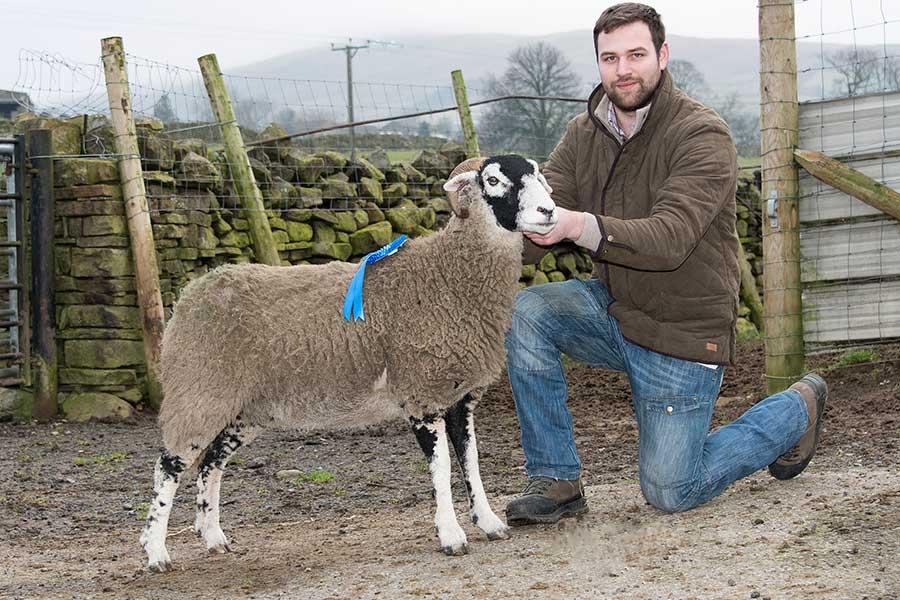 Swaledale in-lamb ewe