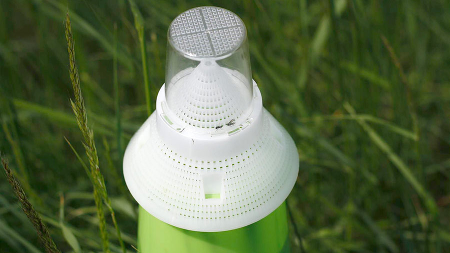 Pea and bean weevil trap