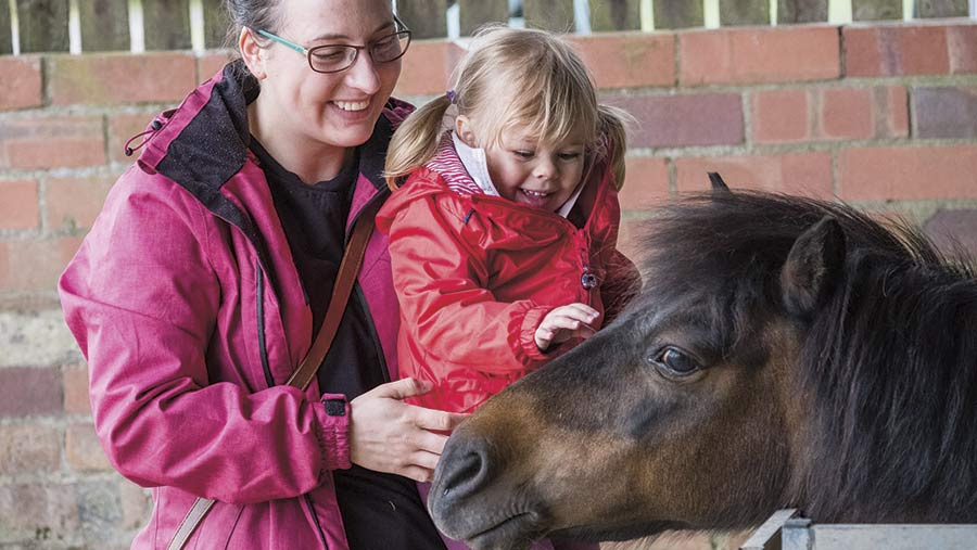 A young girl strokes a pony