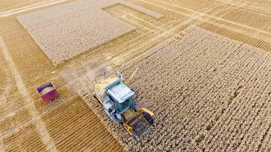 Plot harvest