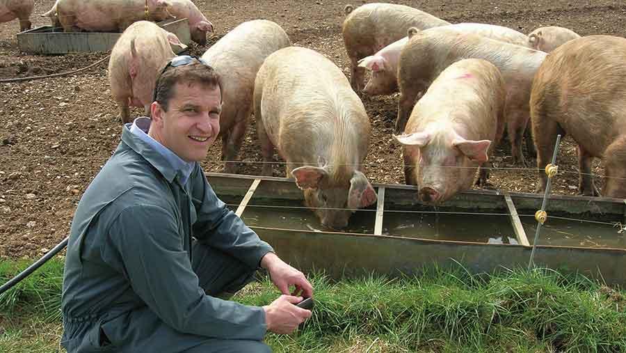 Richard Pearson kneeling with pigs in field