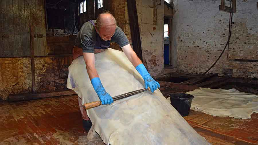 Roger Tucker dehairing a calf hide by hand