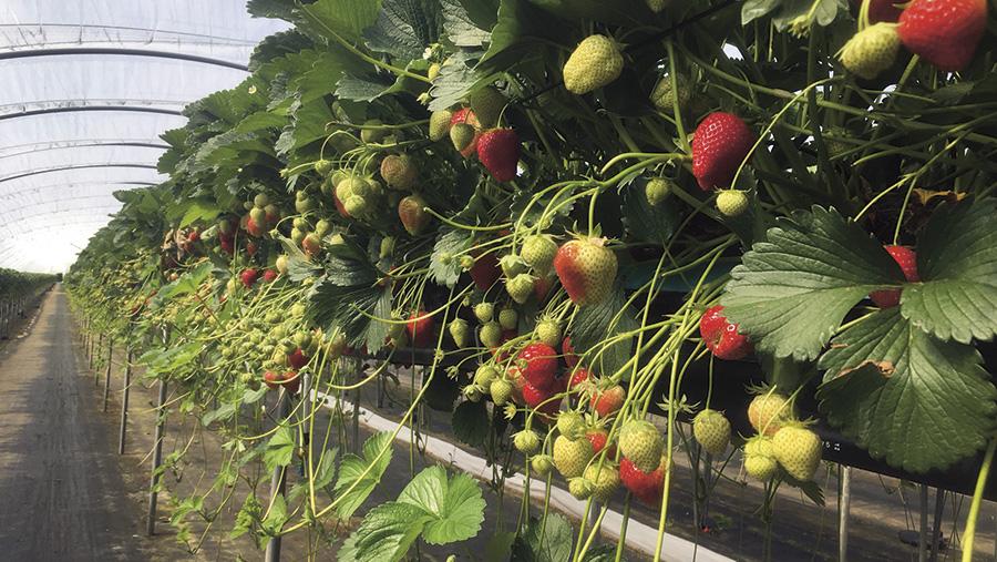 Slavey fruit farm