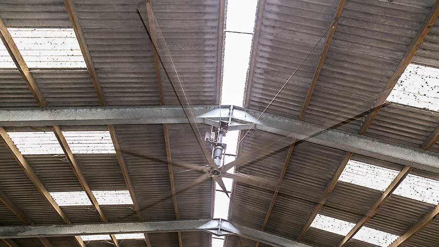 Fan inside the cow shed
