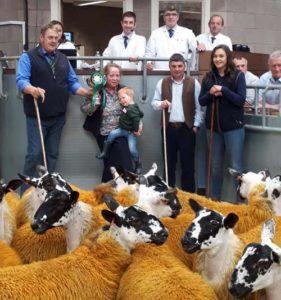 Sheep at a sheep sale
