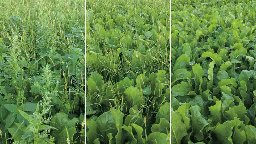 Sugar beet weed tests