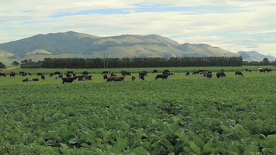 The Walkers' farm in New Zealand