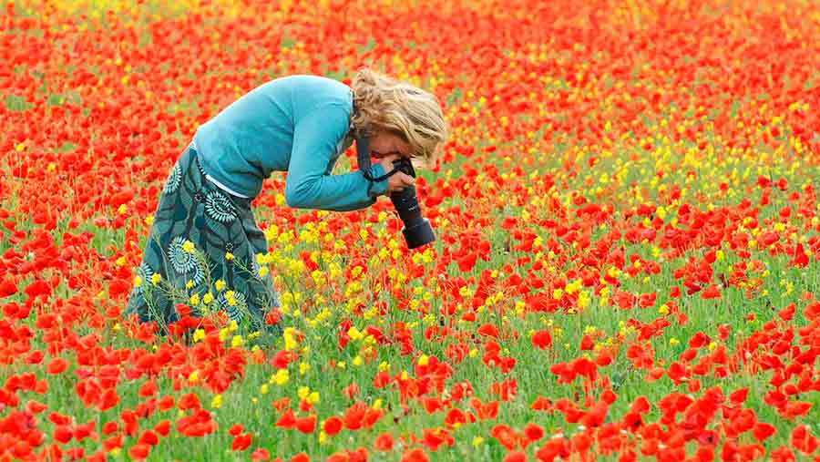 A photographer gets a close-up of the autumn colour