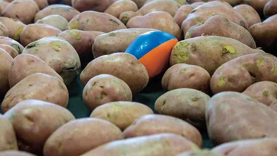 TuberLog-with-Potatoes